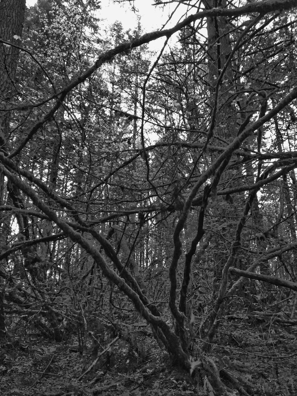 TreePorn Beauty In Nature Tree Branch Tranquility Nature Tranquil Scene Outdoors Forest Scenics Low Angle View Sky Bare Tree Tree Trunk Layers And Textures Abstractions In Nature Abstract Nature Landscape Backgrounds Growth Black And White Abstractions In BlackandWhite Abstractions