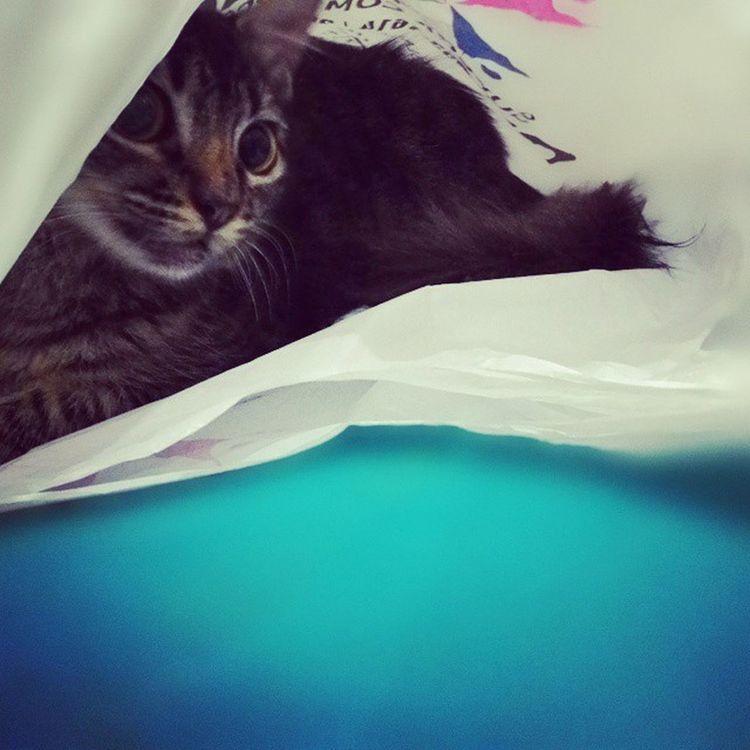Cat Catinabag
