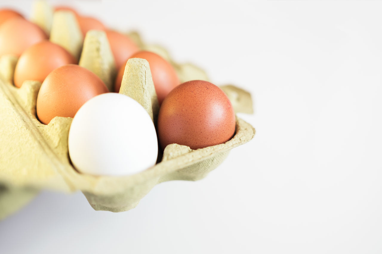 Brown Carton Close-up Copy Space Day Egg Egg Carton Eggshell Food Food And Drink Fragility Freshness Healthy Eating Healthy Lifestyle Inside Of Medium Group Of Objects No People Organic Protein Raw Food Standing Out From The Crowd Studio Shot White Background White Color