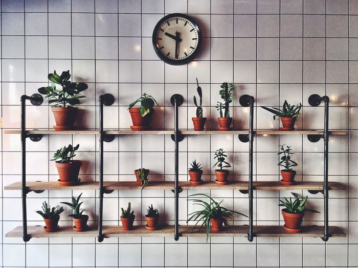 Wall Plant Decoration Wood Metal Coffeshop