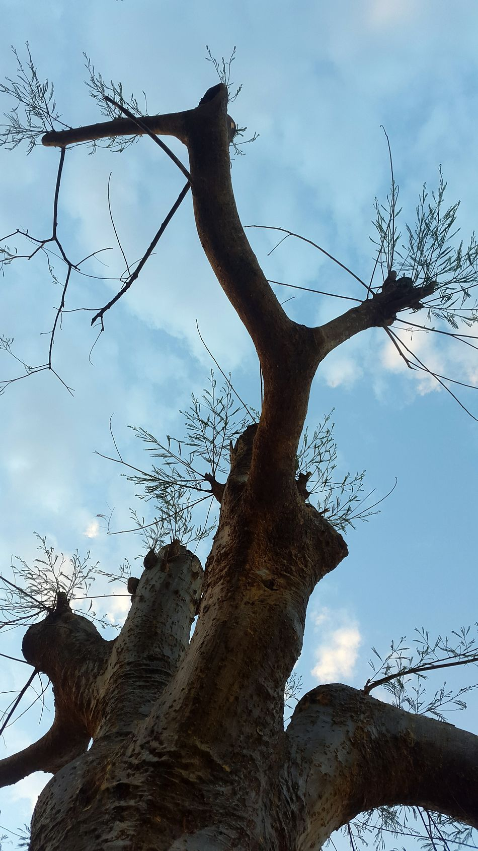 Sky And Clouds Tree Art Silhouette Photography Nature Awesome_view