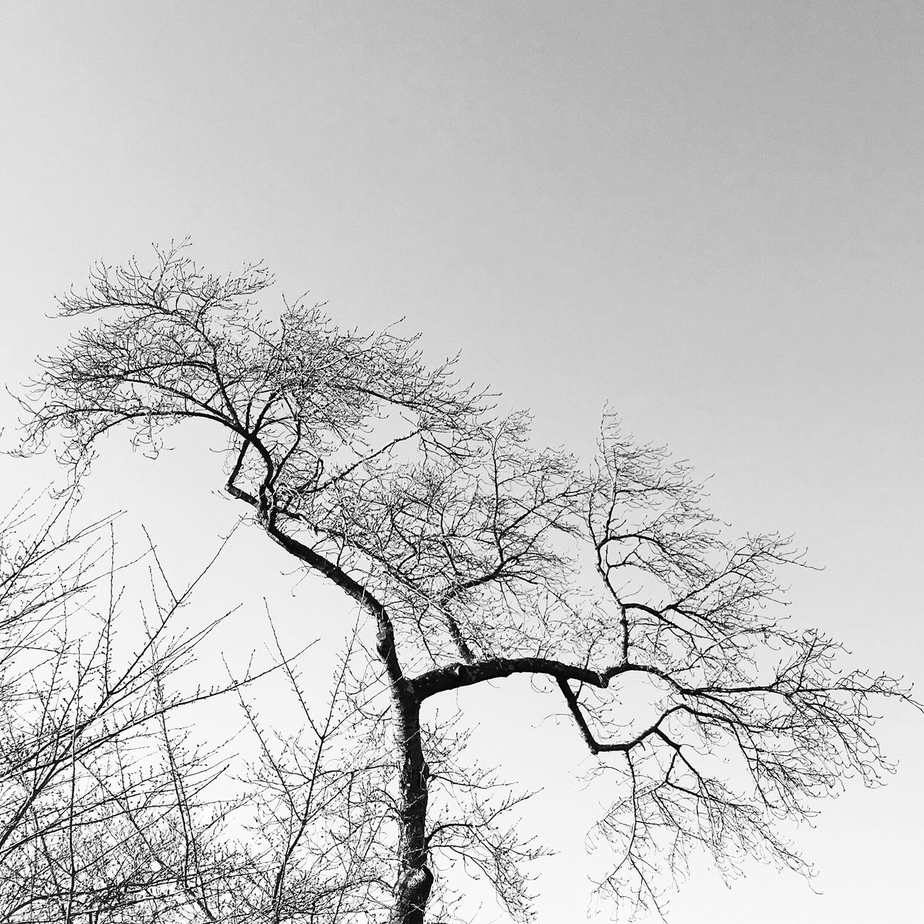 Tree Beauty In Nature From My Point Of View Streetphotography EyeEm Best Shots - Black + White Blackandwhite Bnw Monochrome