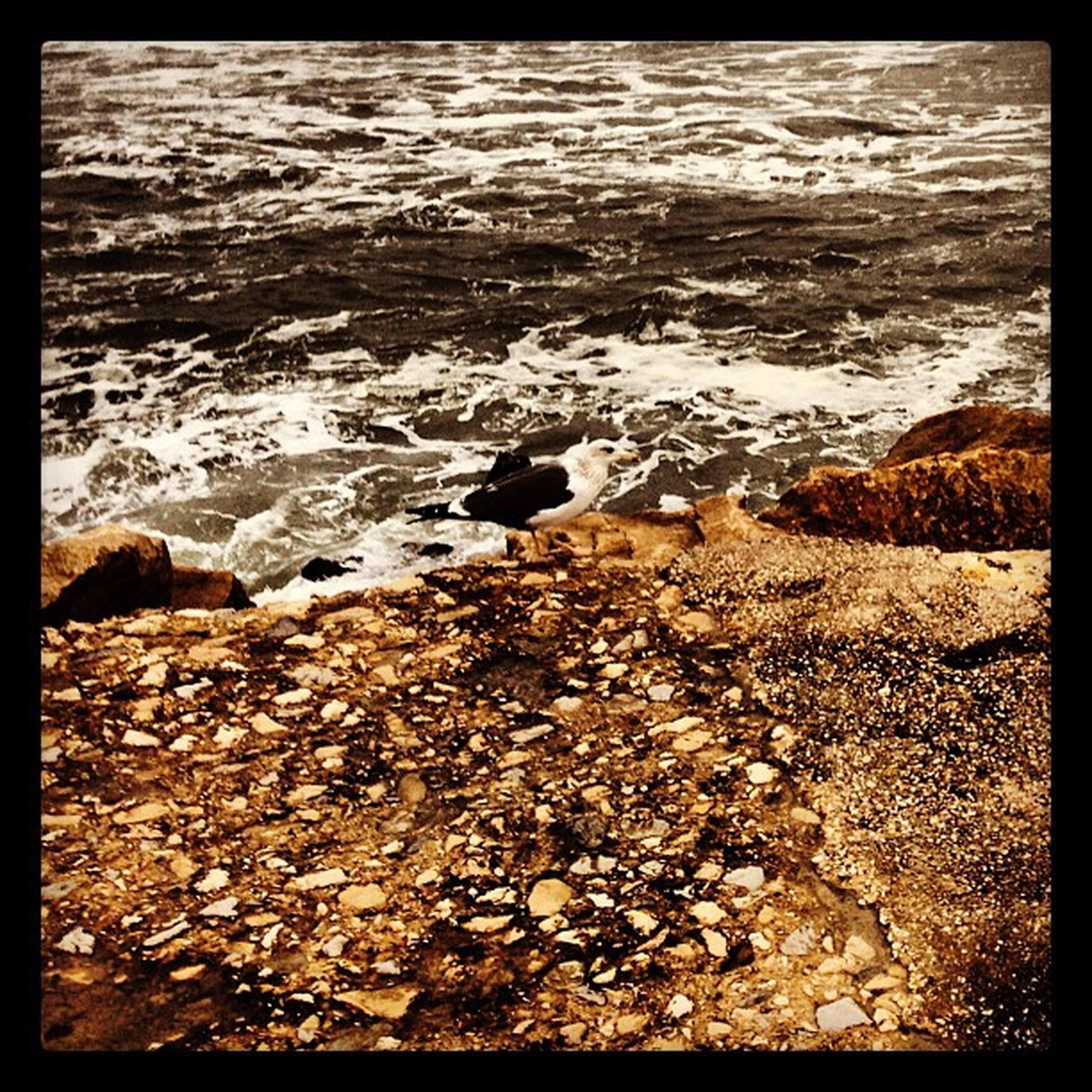 water, transfer print, beach, shore, auto post production filter, tranquility, rock - object, nature, sea, beauty in nature, tranquil scene, scenics, surf, sand, wave, stone - object, rock, stone, pebble, outdoors