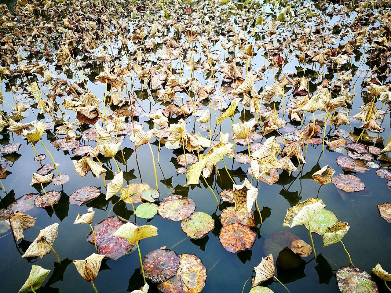 Nature Beauty In Nature Flower No People Water Outdoors Parc Floral De Paris Parc Floral Paris Parisjetaime Ninfea Leaves Autumn
