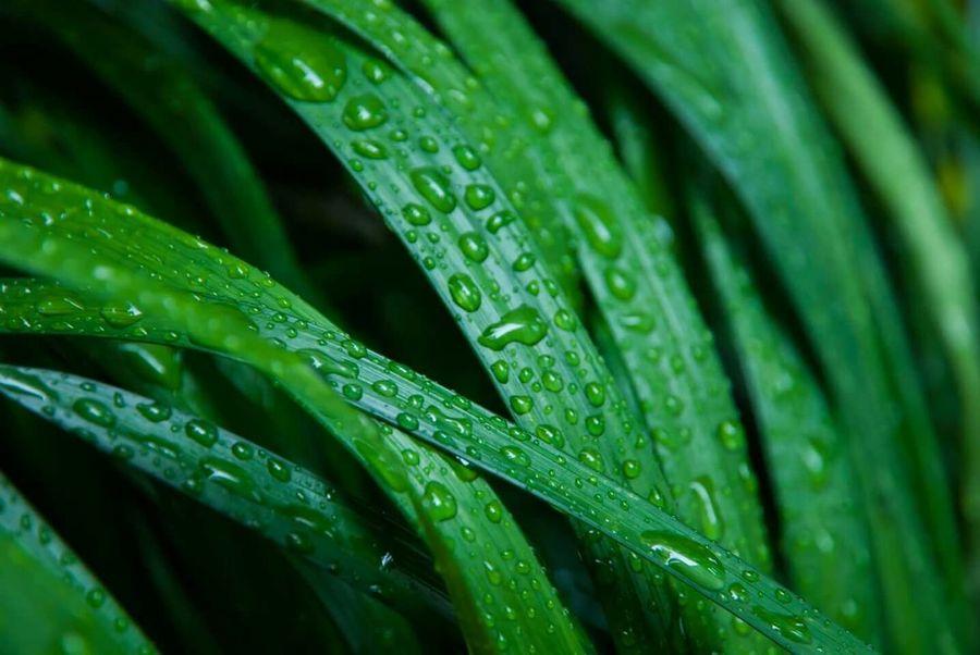 The Drops Series Macrogardener Macro_collection Plantography Enjoying The Sights Ladyphotographerofthemonth Macro Nature Rain Drops Dropsoflife Enjoying The Rain Drops