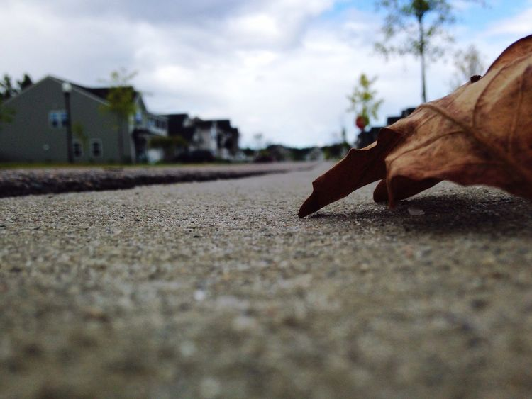 Surface Level Low Section Selective Focus Street Leaf Person Day Outdoors Sky Hobbies