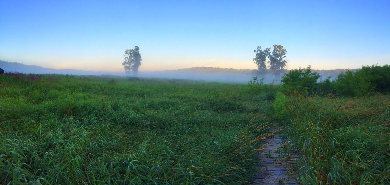 Misty Morning Nature Tranquil Scene Audubon Bird Sancuary Hastings, Michigan Barry County Michigan Gun Lake Scenics Field Grass Outdoors Tranquility Sky Clear Sky