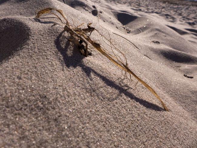 Baltic Sea Beach Dry Grass Heidkate Kiel Sand Sand & Sea Sand Dune Sandy Sandy Beach Shore Straw Summertime Tranquil Scene