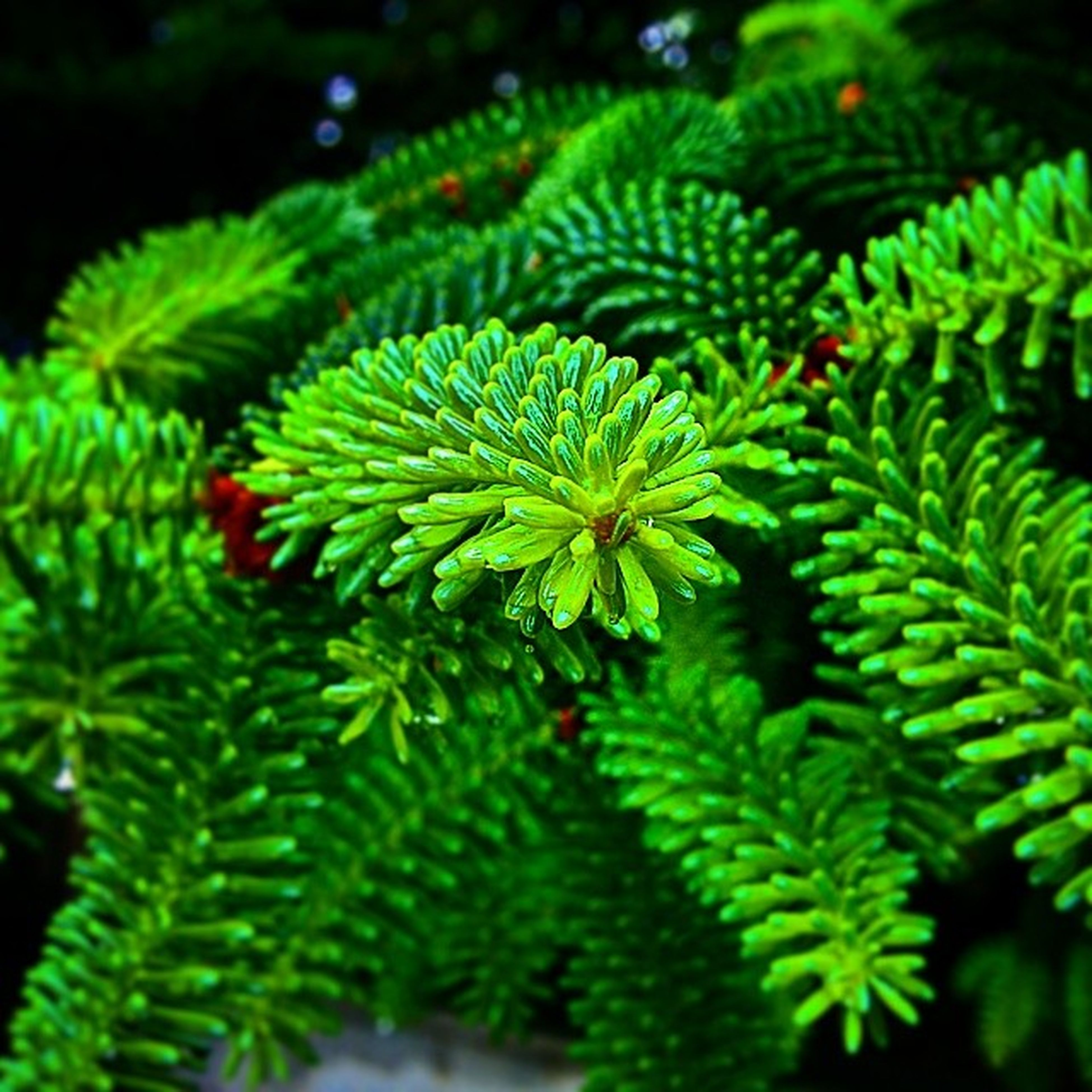 green color, growth, leaf, plant, nature, close-up, beauty in nature, freshness, green, selective focus, focus on foreground, growing, tranquility, outdoors, lush foliage, no people, leaves, high angle view, fern, day