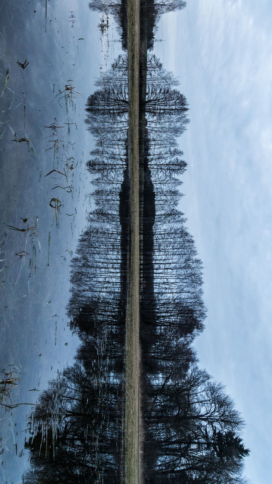 lake and trees and fish Beauty In Nature Cold Temperature DEAD FISH EyeEm Best Shots EyeEm Nature Lover Fish Lake Nature Outdoors Reflection Sunday_flip Tranquil Scene Tree Water Water Reflections Waterfront Winter