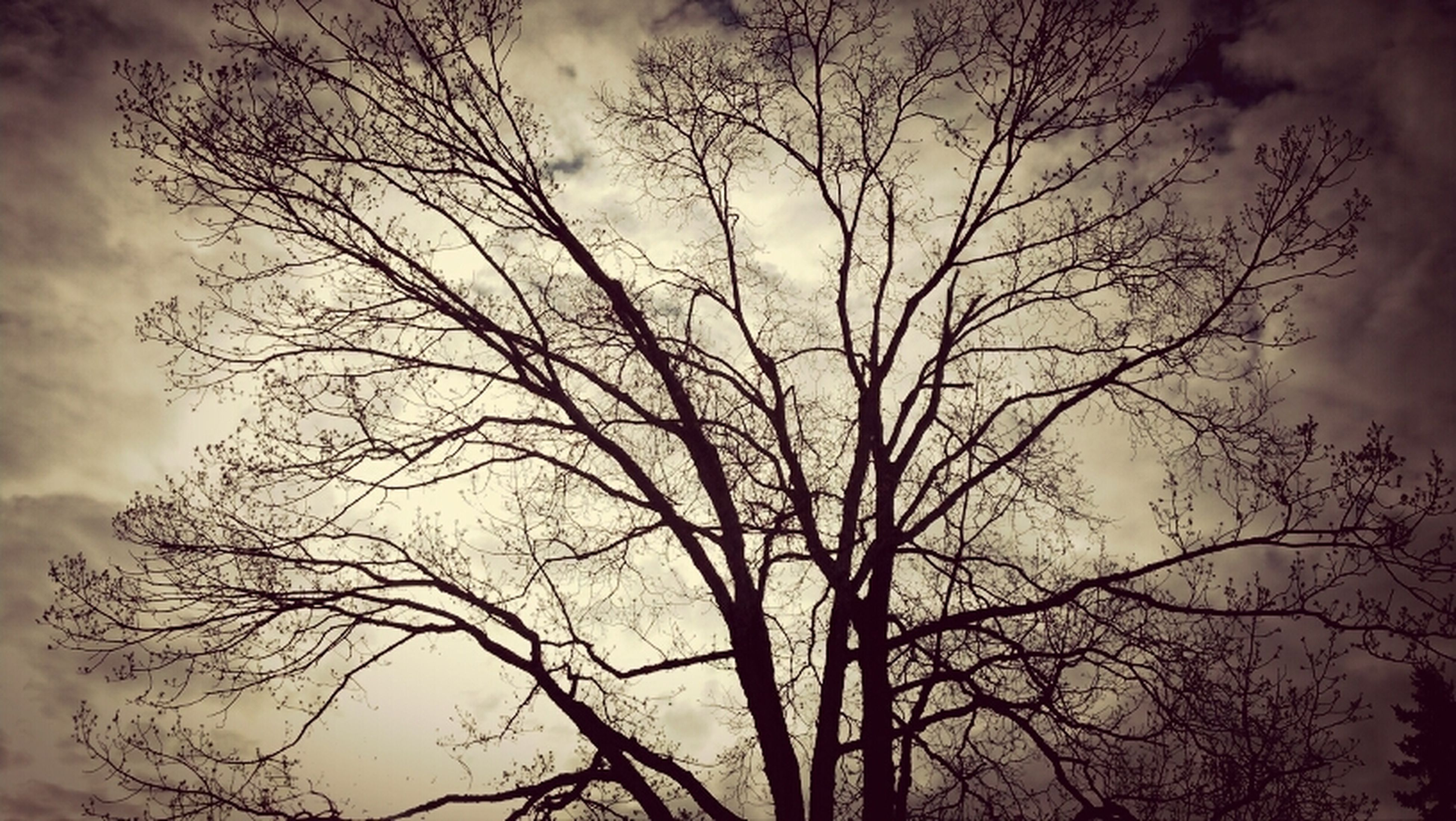 bare tree, branch, sky, tree, low angle view, silhouette, cloud - sky, tranquility, beauty in nature, nature, cloudy, scenics, tranquil scene, sunset, cloud, dusk, outdoors, weather, no people, idyllic