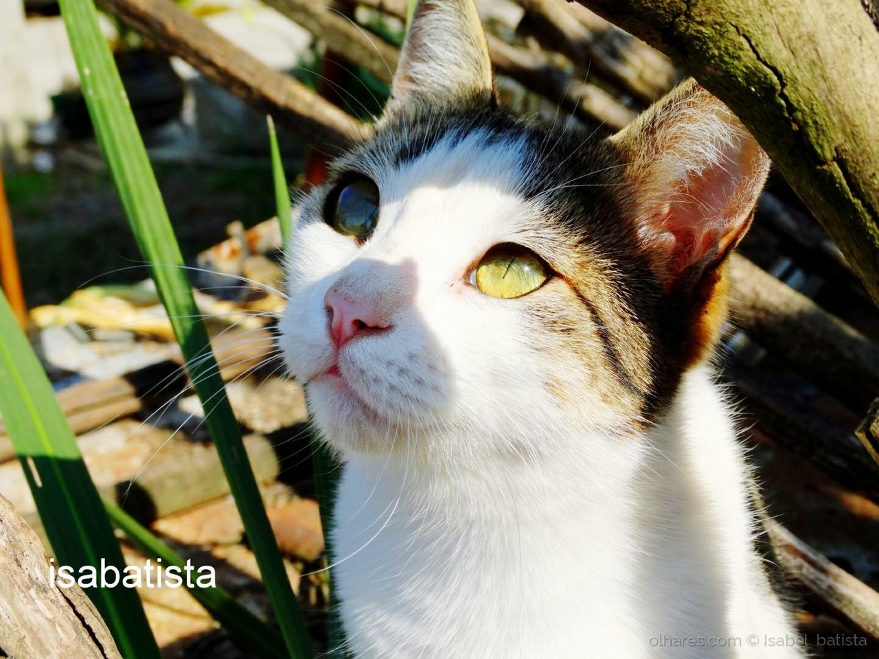 one animal, domestic cat, animal themes, pets, domestic animals, mammal, feline, no people, close-up, day, outdoors