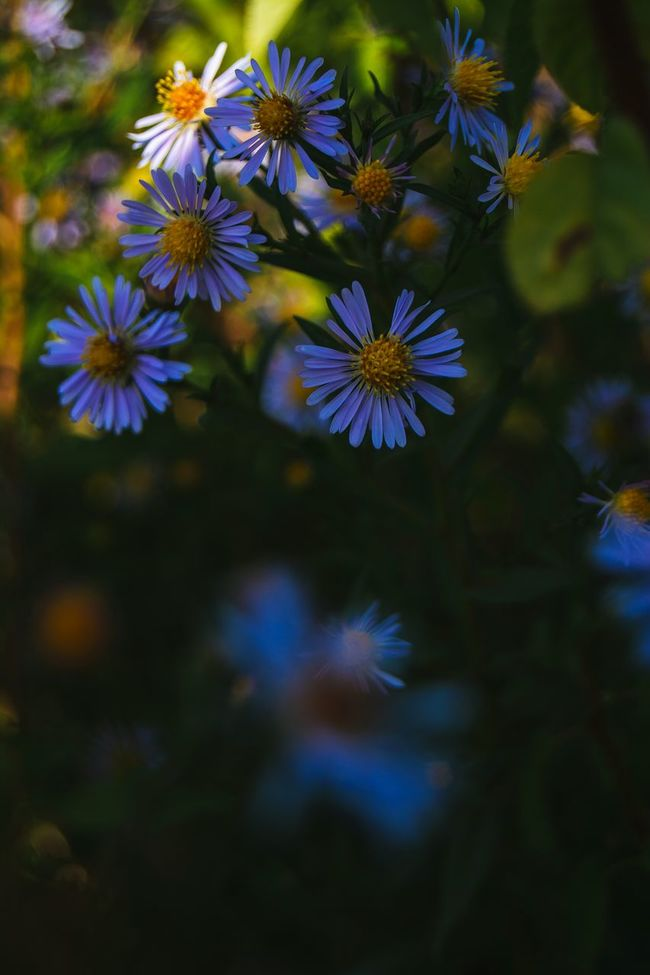 Flower Freshness Growth Beauty In Nature Nature Flower Head Stem Plant Petal Selective Focus In Bloom Botany Softness Focus On Foreground Belarus Nature Meadow Flowers From My Point Of View Autumn Flowers Autumn Colors Fall Colors By Ivan Maximov