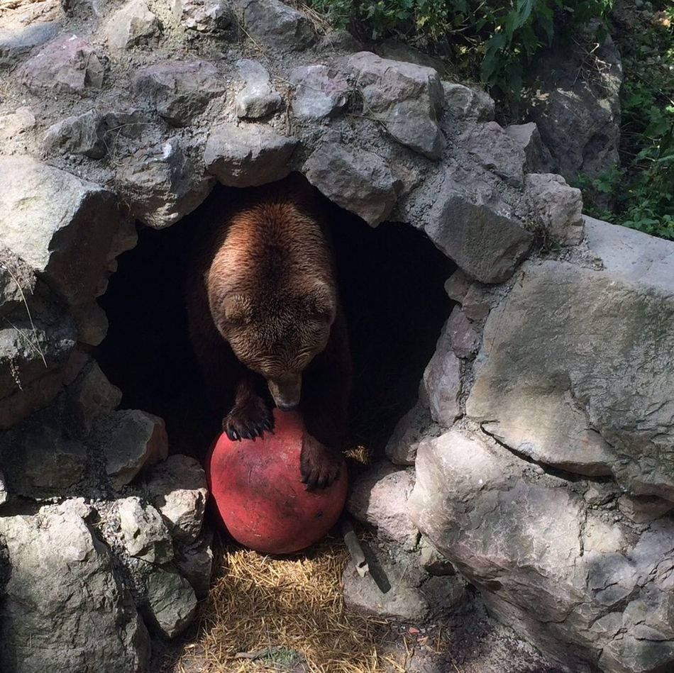 Beautiful stock photos of bear, Animal Den, Animal Themes, Animals In The Wild, Austria