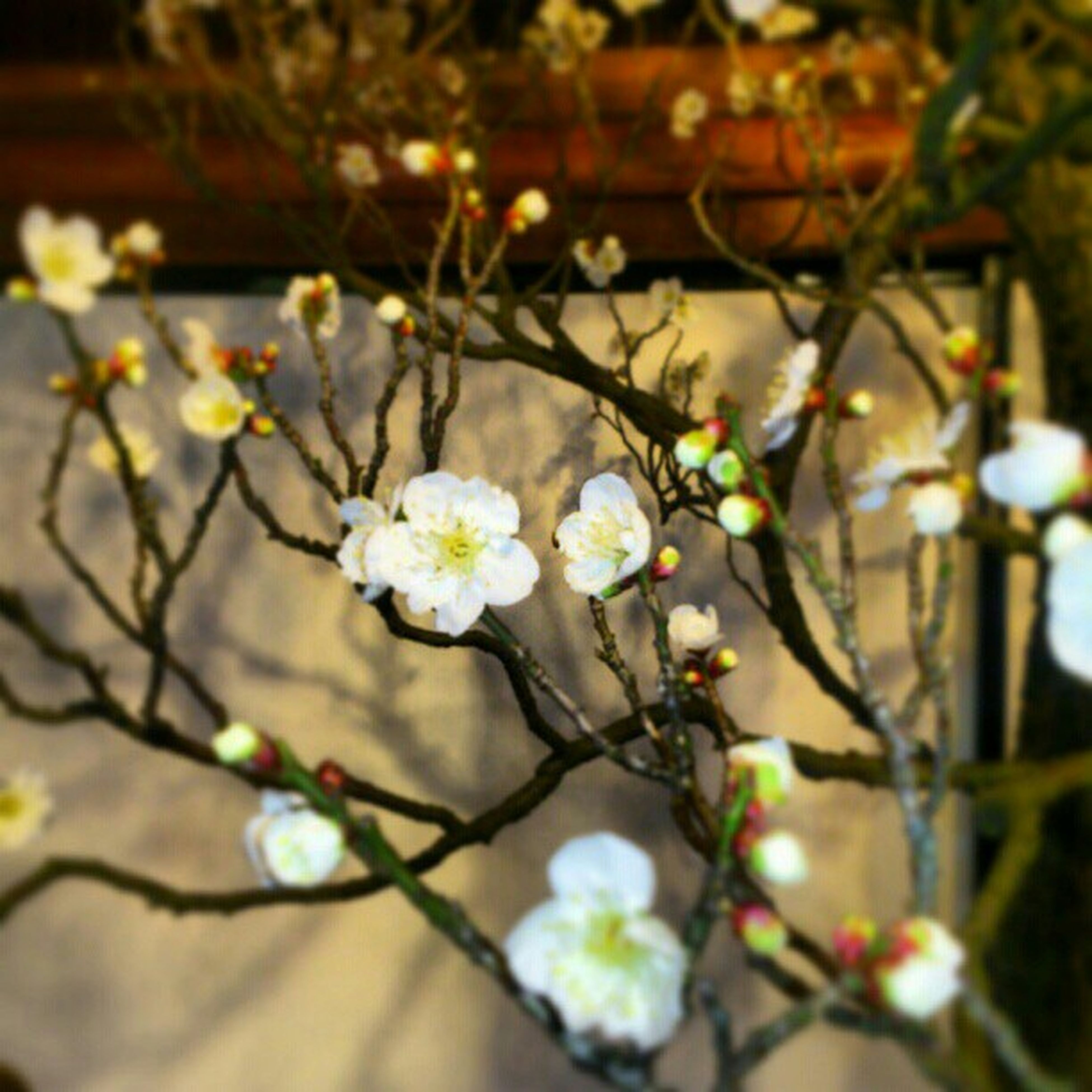 flower, freshness, growth, fragility, petal, white color, focus on foreground, beauty in nature, nature, close-up, blooming, plant, selective focus, blossom, flower head, in bloom, branch, springtime, stem, botany