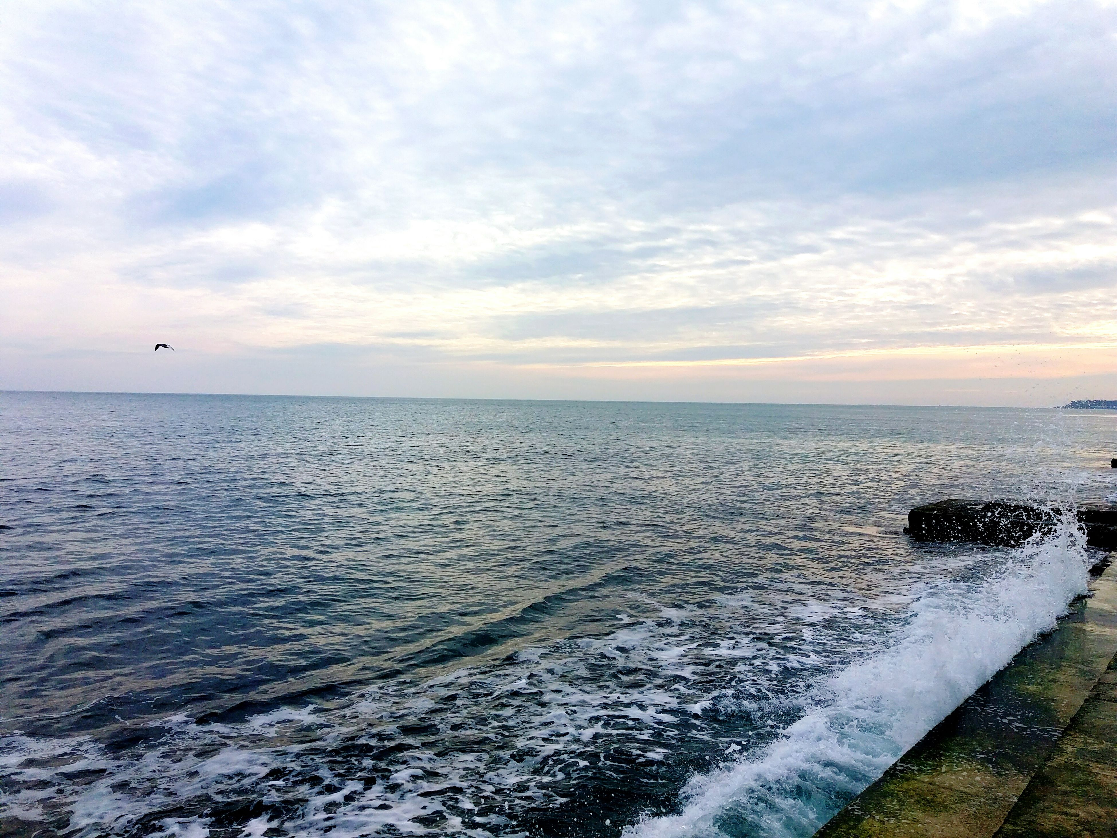 horizon over water, sea, scenics, sky, water, beauty in nature, nature, sunset, flying, cloud - sky, tranquil scene, bird, tranquility, beach, outdoors, no people, day