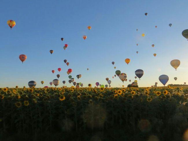 CHAMBLEY Lorraine Lorraine Mondial Air Ballons 2013 LMAB 2013 Hot Air Balloon Montgolfière  Montgolfieres No Filter Sunflowers Sunset