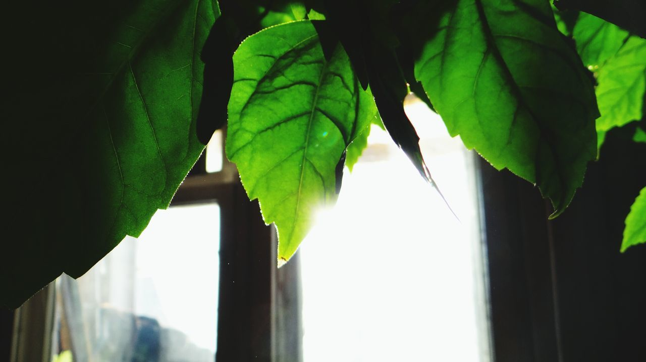 Green Color Close-up Nature Leaf No People Outdoors Sky Beauty In Nature Day Beauty In Nature Freshness Tree Plant Green Color Nature Growth Window Russia EyeEm