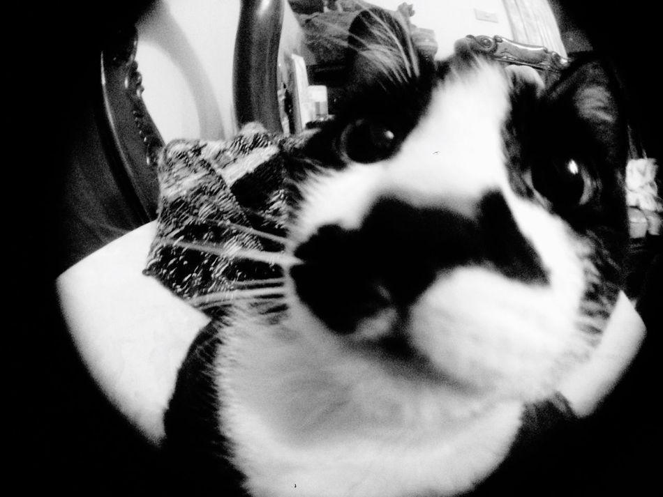 black & white on black & white cat