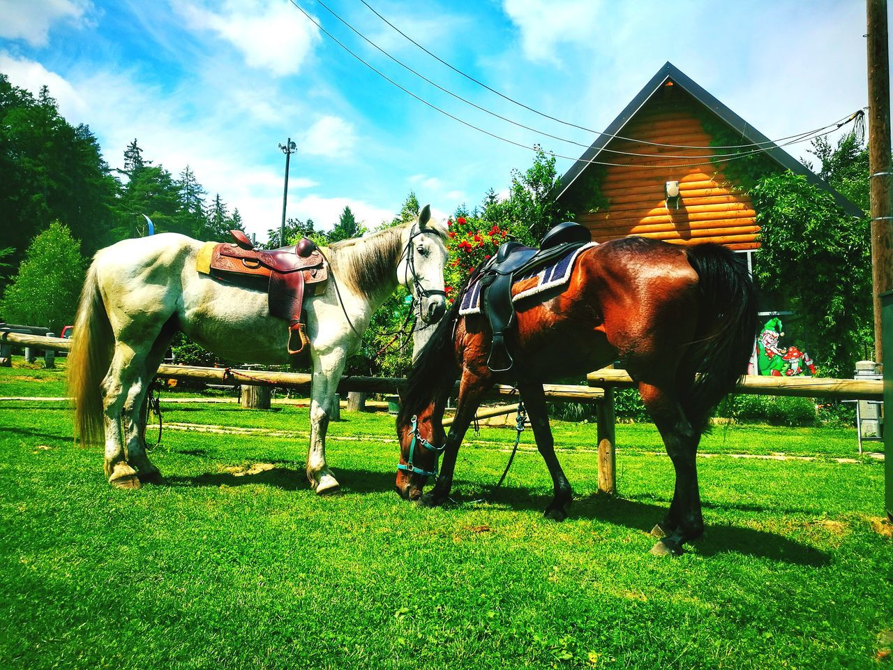 Horse Domestic Animals Grass Animal Themes Cloud - Sky Outdoors No People Day Sky Horse Photography  Horse Lovers Two Animals Horse Looking At You Horse Love Nature Blue Sky Beautiful Day Beauty In Nature Horsepower Green Color Landscape Blue Freshness Nature Energy Love Taking Pictures ❤️