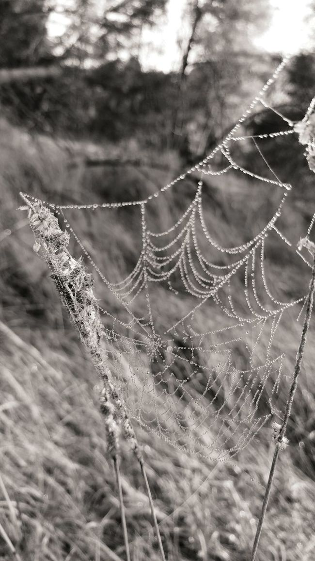 Spider Web Spiders Web Spidersweb Natura Nature Black And White Czarno-białe Black & White Czarnobiałe Grass Trawa Lg G5 LG  Lgg5photography Smartphonephotography Smartphone Photography Monochrome Photography