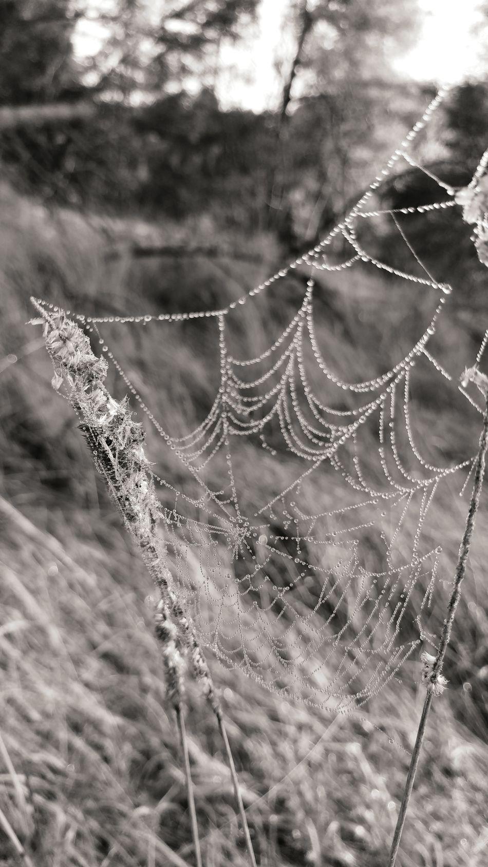 Spider Web Spiders Web Spidersweb Natura Nature Black And White Czarno-białe Black & White Czarnobiałe Grass Trawa Lg G5 LG  Lgg5photography Smartphonephotography Smartphone Photography Monochrome Photography