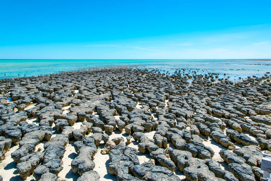 Australia Beach Photography Isolated Nature Beach Beauty In Nature Blue Blue Sky Clear Sky Day Geological Formation Geology Horizon Over Water Nature No People Outdoors Scenics Sea Shark Bay Shore Sky Stromatolites Tranquil Scene Tranquility Water