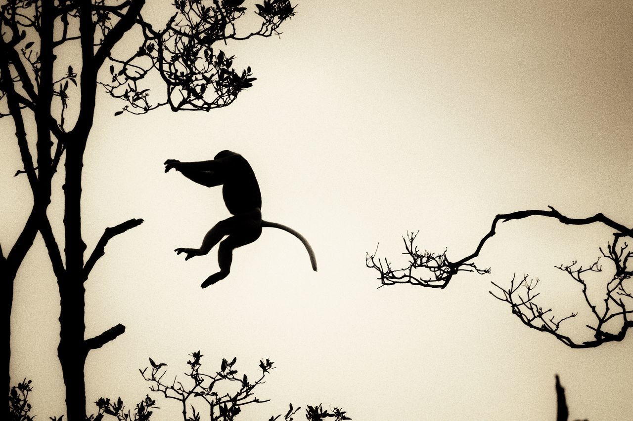 jumping, tree, mid-air, branch, silhouette, bare tree, outdoors, clear sky, full length, flying, nature, animal themes, one animal, low angle view, motion, animals in the wild, day, stunt, energetic, sky, one person, mammal, people