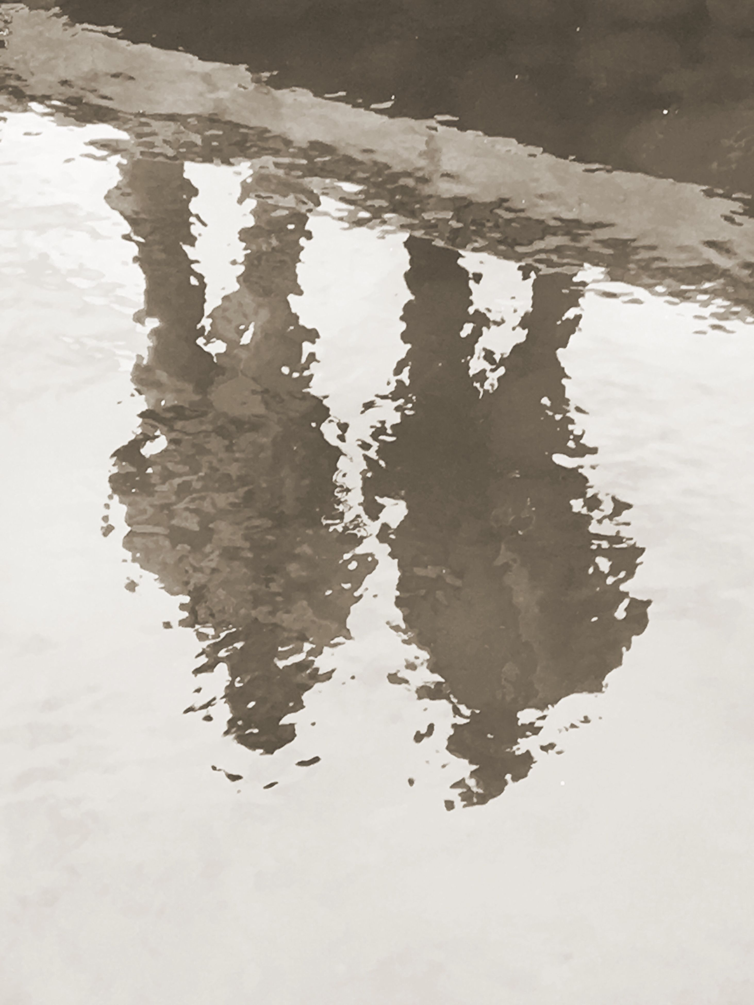 water, reflection, puddle, sky, day, nature, no people, water surface, petal
