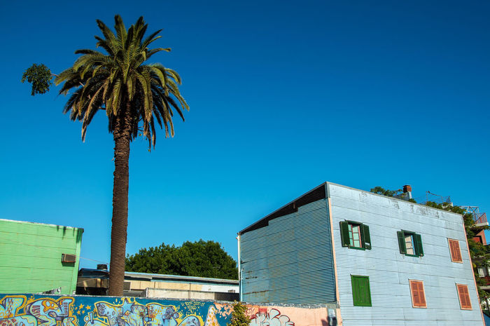 Blue building and palm tree in historic La Boca neighborhood in Buenos Aires Architecture Argentina Blue Boca Buenos Aires Bulding Caminito Capital Federal Colorful Colors Corrugated Historic La Boca La Boca, Buenos Aires Landmark Palm Pattern Poor  Rustic Sightseeing Sky Street Tango Tree Vintage