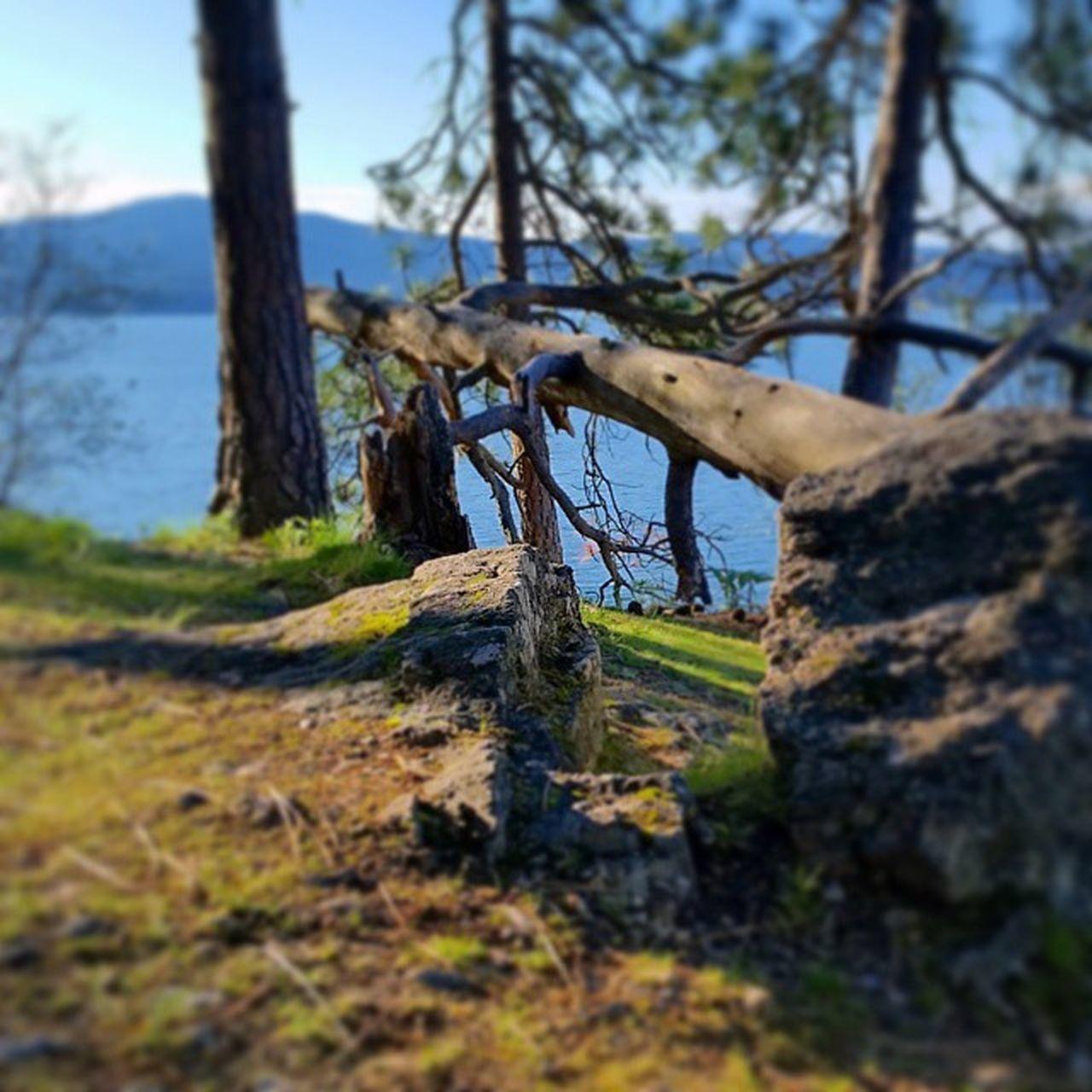 Trailrunning MakeItHappen Running 2.5 miles TubbsHill Northwest Upperleftusa LakeCoeurdalene
