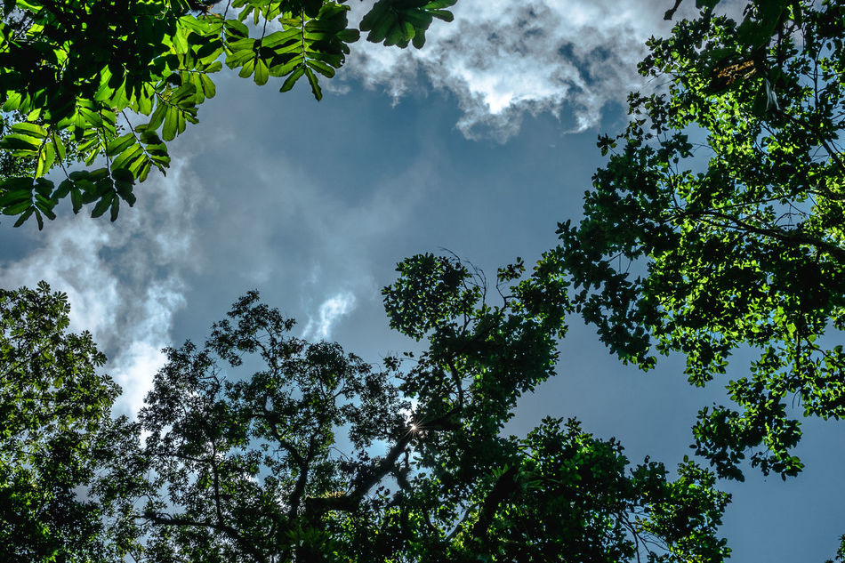 Beauty In Nature Cloud - Sky Day Forest Jungle Leaf Leaves Love Low Angle View Mexico Nature Nature Nature Photography No People Outdoors San Luis Potosí Sky Sky And Clouds Tree Trees Xilitla