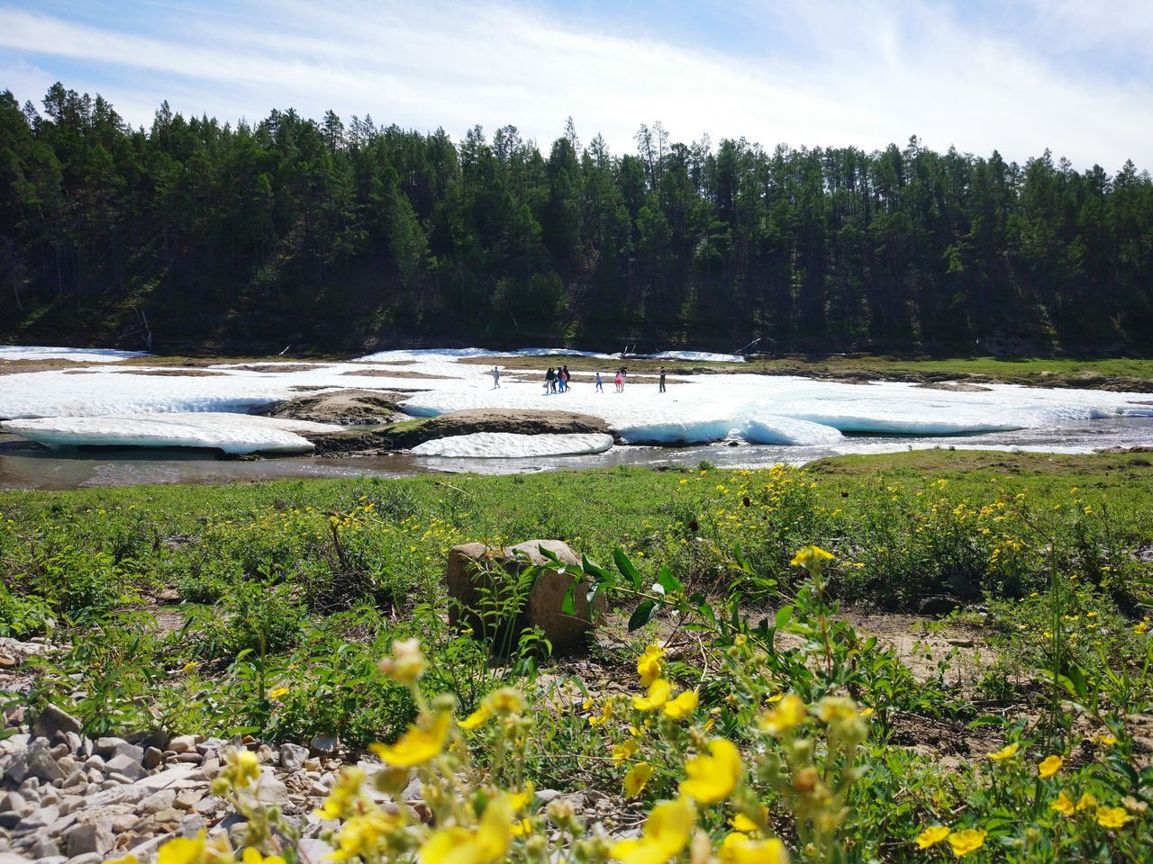 Buluus Flower Snow Summer Sky Yakutsk Yakutia Repablic Of Sakha (Yakutia)