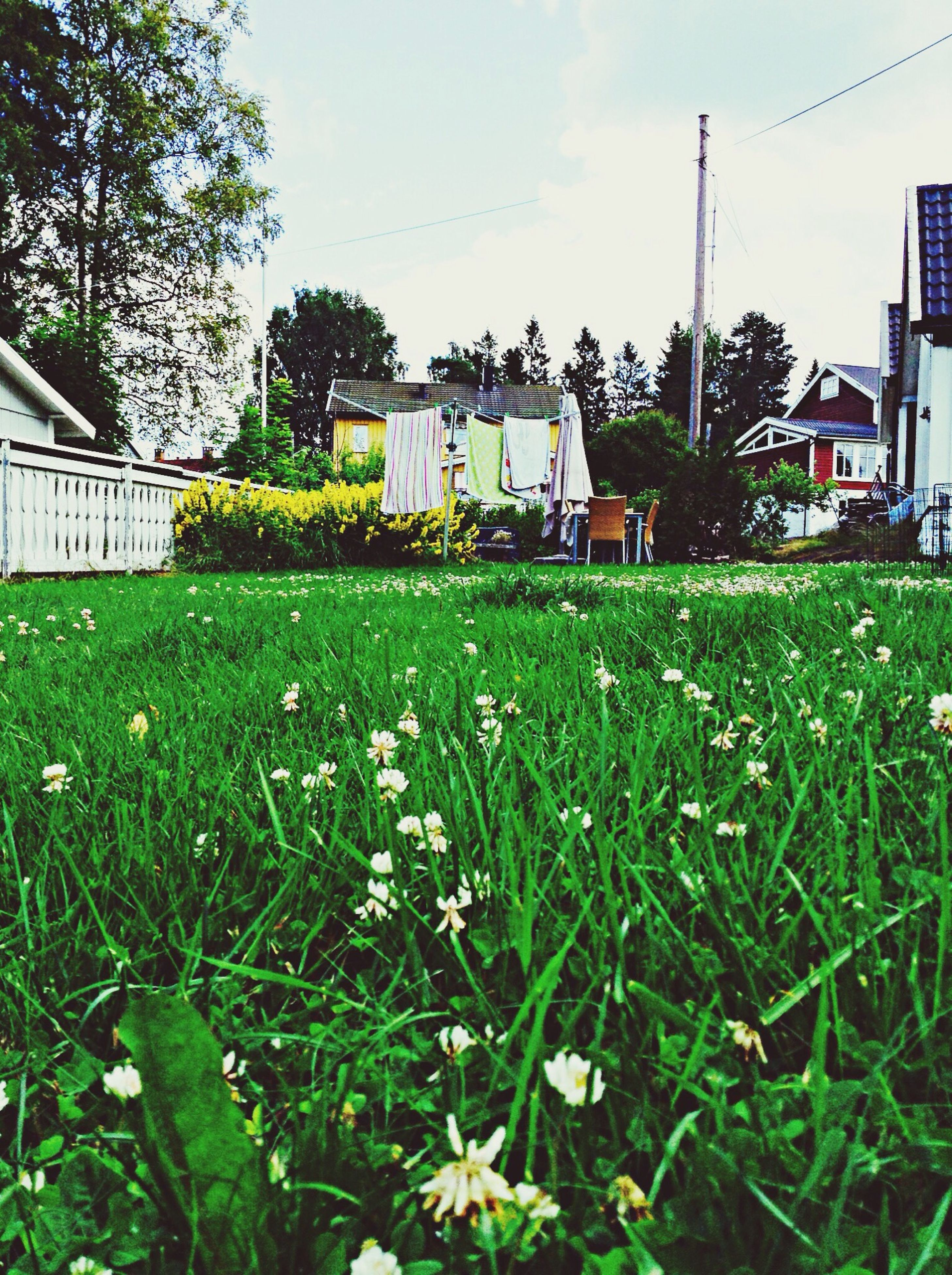 grass, building exterior, architecture, built structure, growth, field, plant, green color, sky, house, flower, nature, grassy, freshness, day, lawn, outdoors, no people, front or back yard, growing