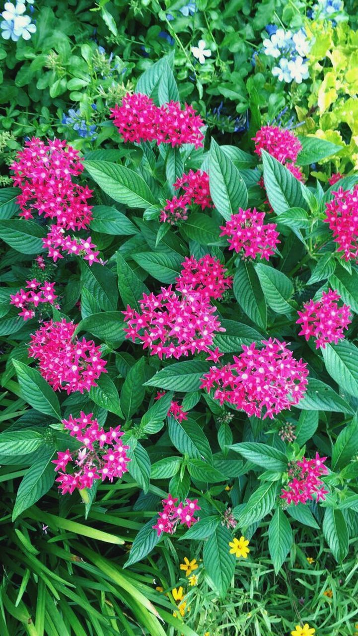 green color, flower, growth, plant, leaf, pink color, fragility, beauty in nature, no people, outdoors, nature, freshness, day, blooming, close-up, flower head