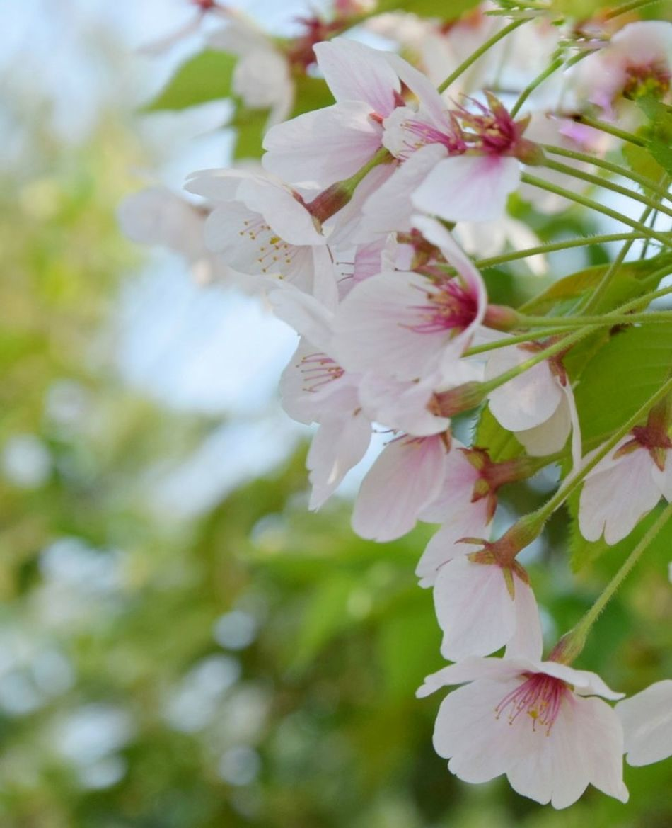 Flower Blossom Nature Beauty In Nature Fragility Springtime Tree Botany Branch Almond Tree Flower Head Close-up Growth Petal Freshness Pink Color Apple Blossom No People Stamen Day