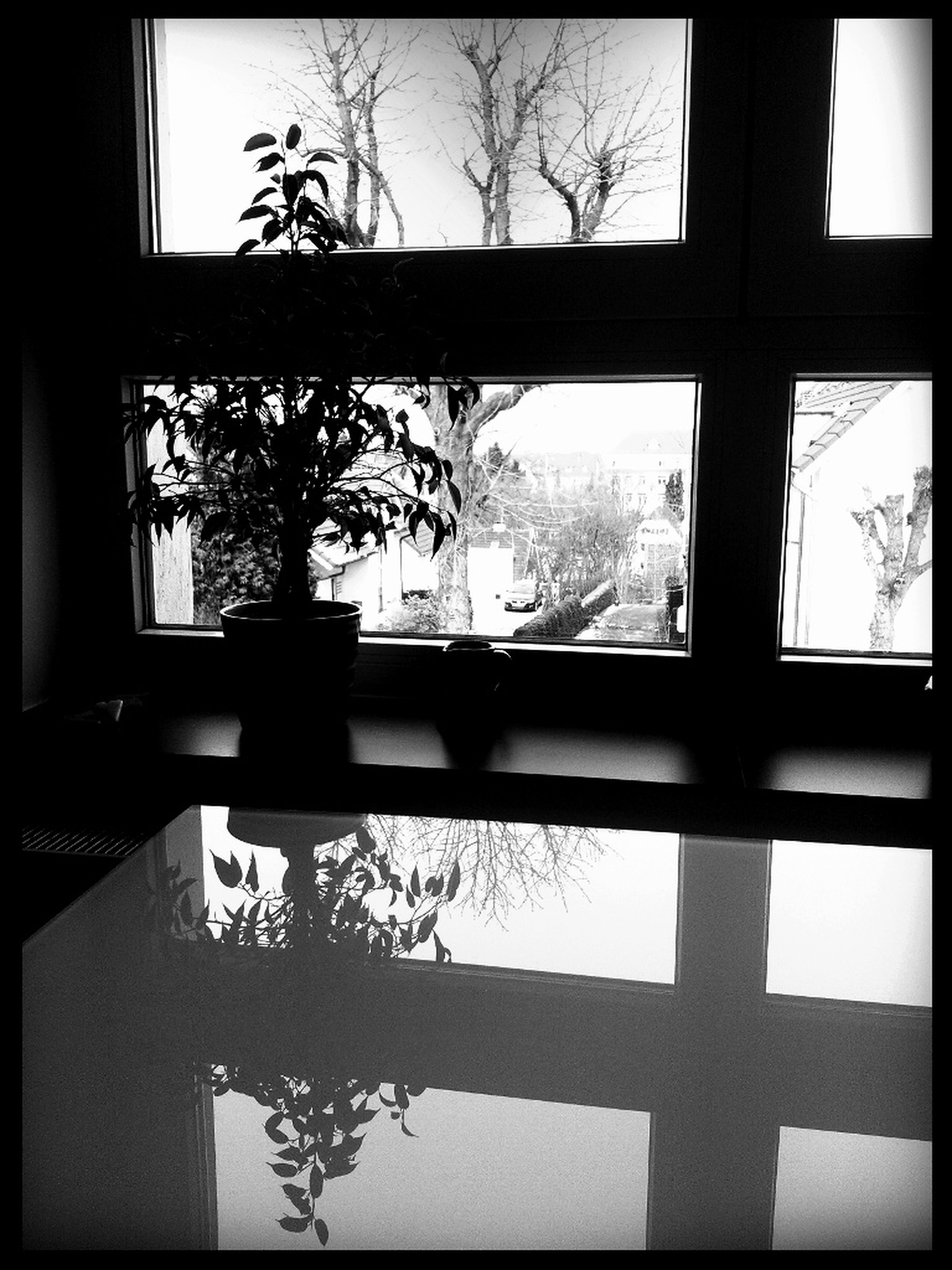 window, indoors, glass - material, transparent, tree, architecture, built structure, building exterior, window sill, house, glass, silhouette, bare tree, home interior, looking through window, reflection, growth, day, residential structure, branch
