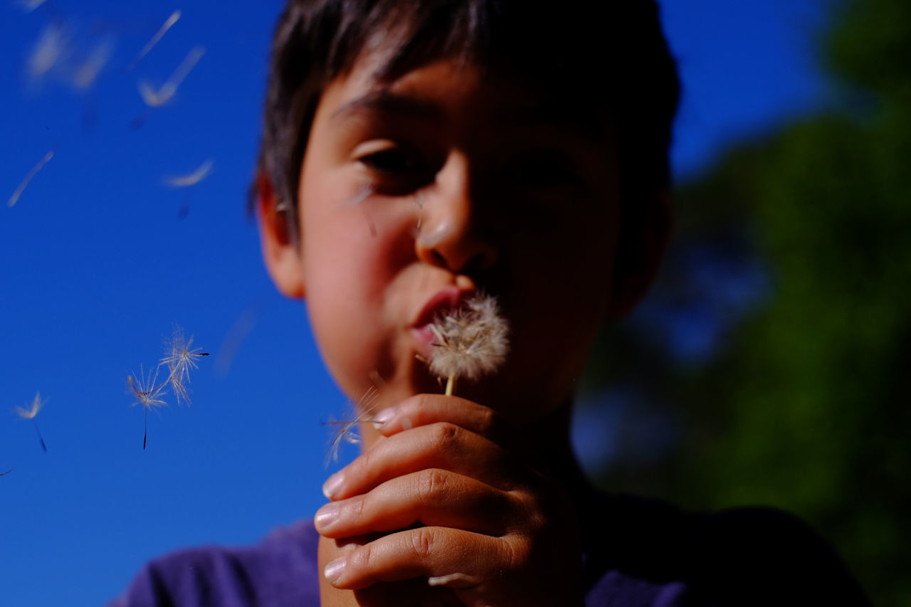 Boy blowing on a dandelion flower over blue sky Boys California Childhood Close-up Dandelion Day Dreaming Focus On Foreground Headshot Human Hand Leisure Activity Lifestyles Nature One Person Outdoors People Plant Real People Sky Sonoma County Taylor Mountain Regional Park USA Wishes