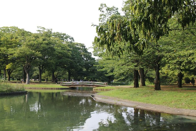 Water Nature Tree Lake Landscape Beauty In Nature Japan Park 日本国 Nature_collection Being A Tourist. Tokyo Days Parks Naturelovers Nippon Nature Photography Park View Tokyo, Japan Tokyonature 東京,晴空塔 Nature Tokyo Park Tokyo Japan Photography 渋谷区 Bridges