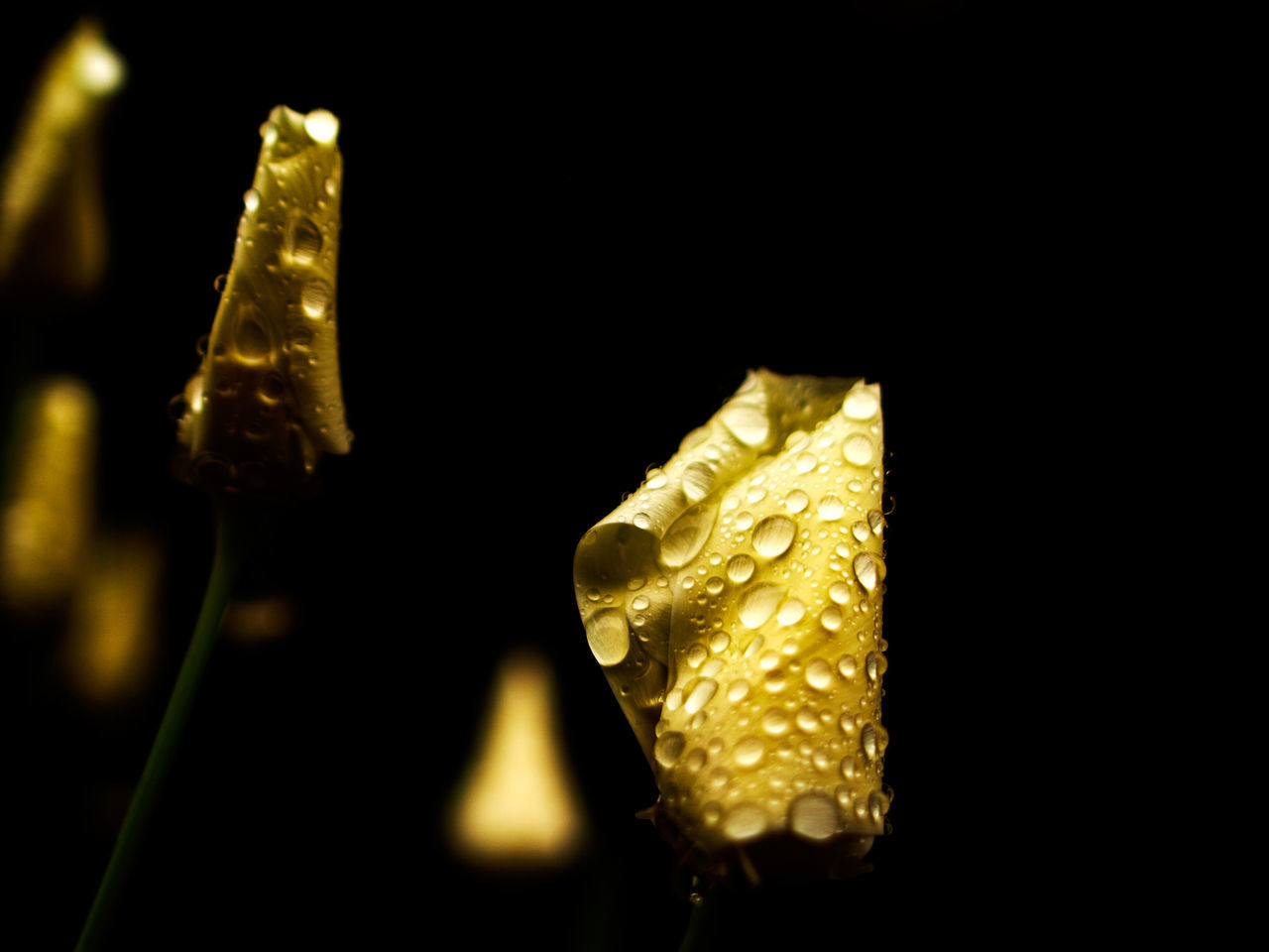 gold colored, studio shot, black background, no people, yellow, food and drink, close-up, indoors, food, night, ingot