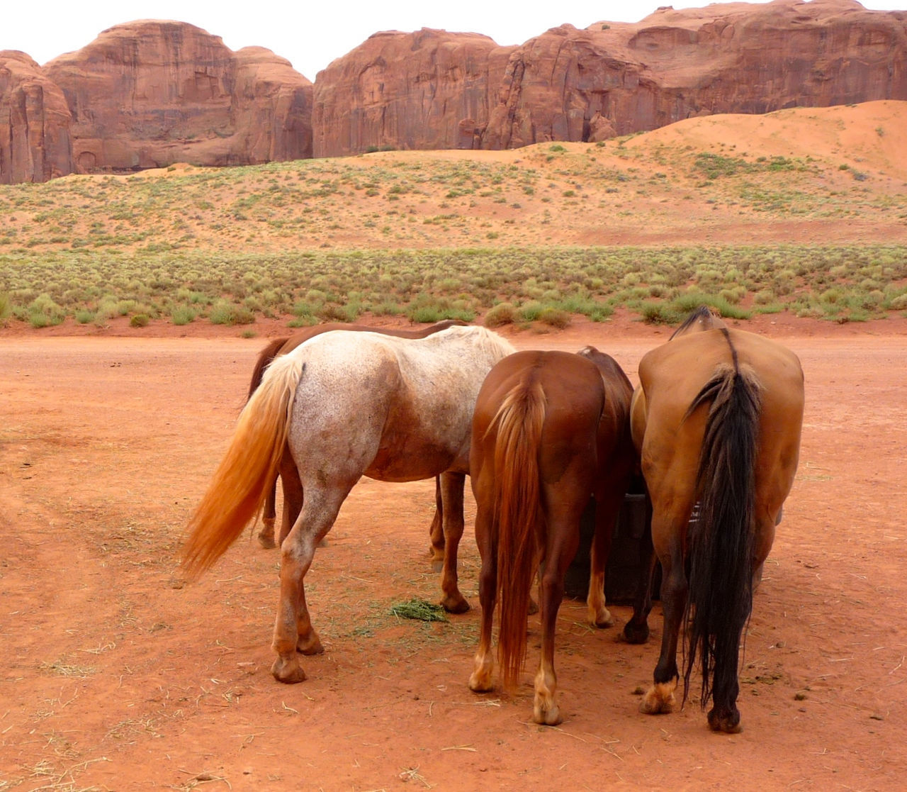 Animal Themes Arizona Brown Desert Domestic Animals Grazing Herbivorous Horse Back Riding Horses Horses Eating Indians  Landscape Livestock Mammal National Park Nature Navajo Navajo Reservation No People Outdoors Traditional Tranquility Travel Photography