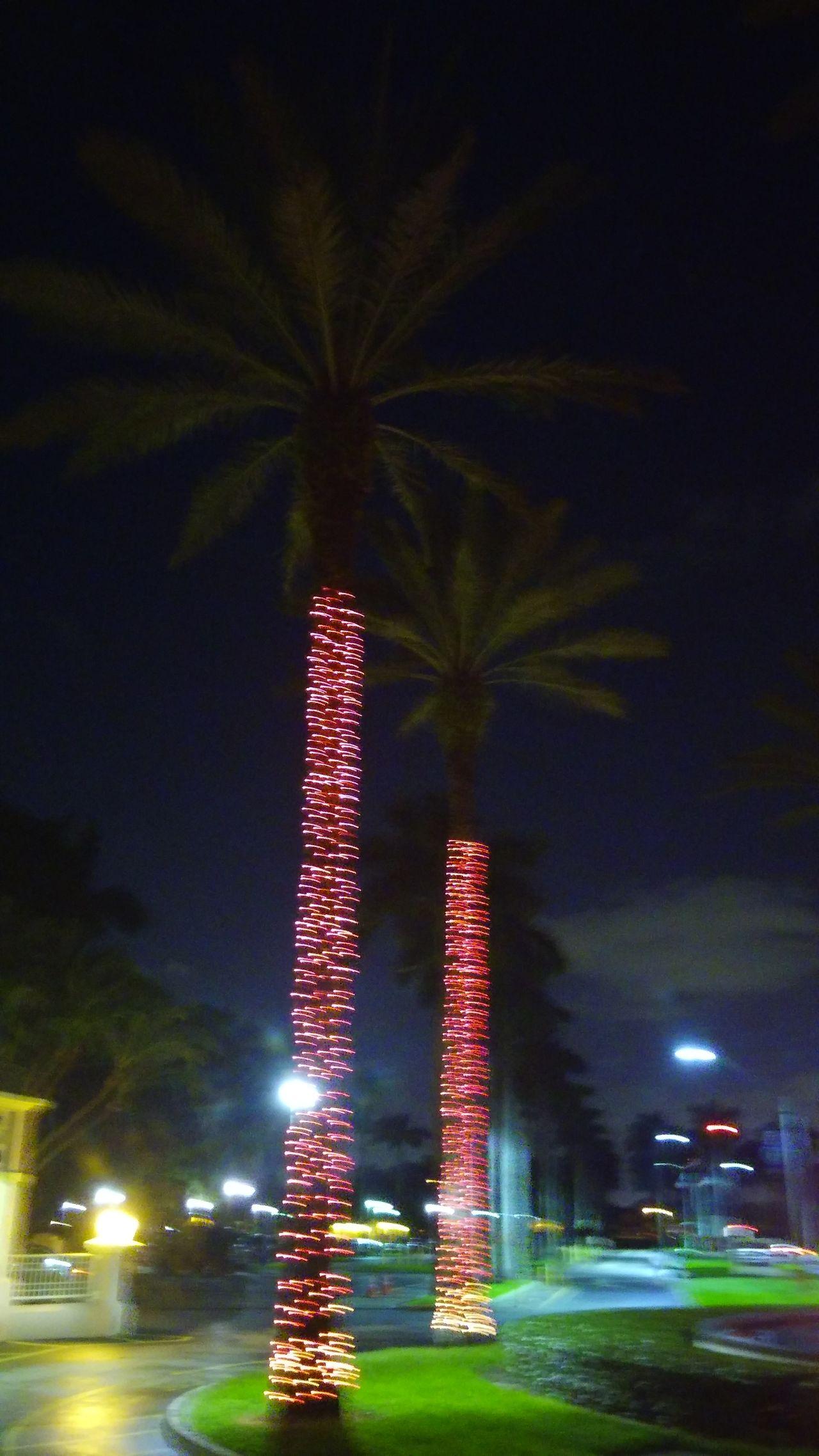 Streetphotography Natur!! Lights Palmas