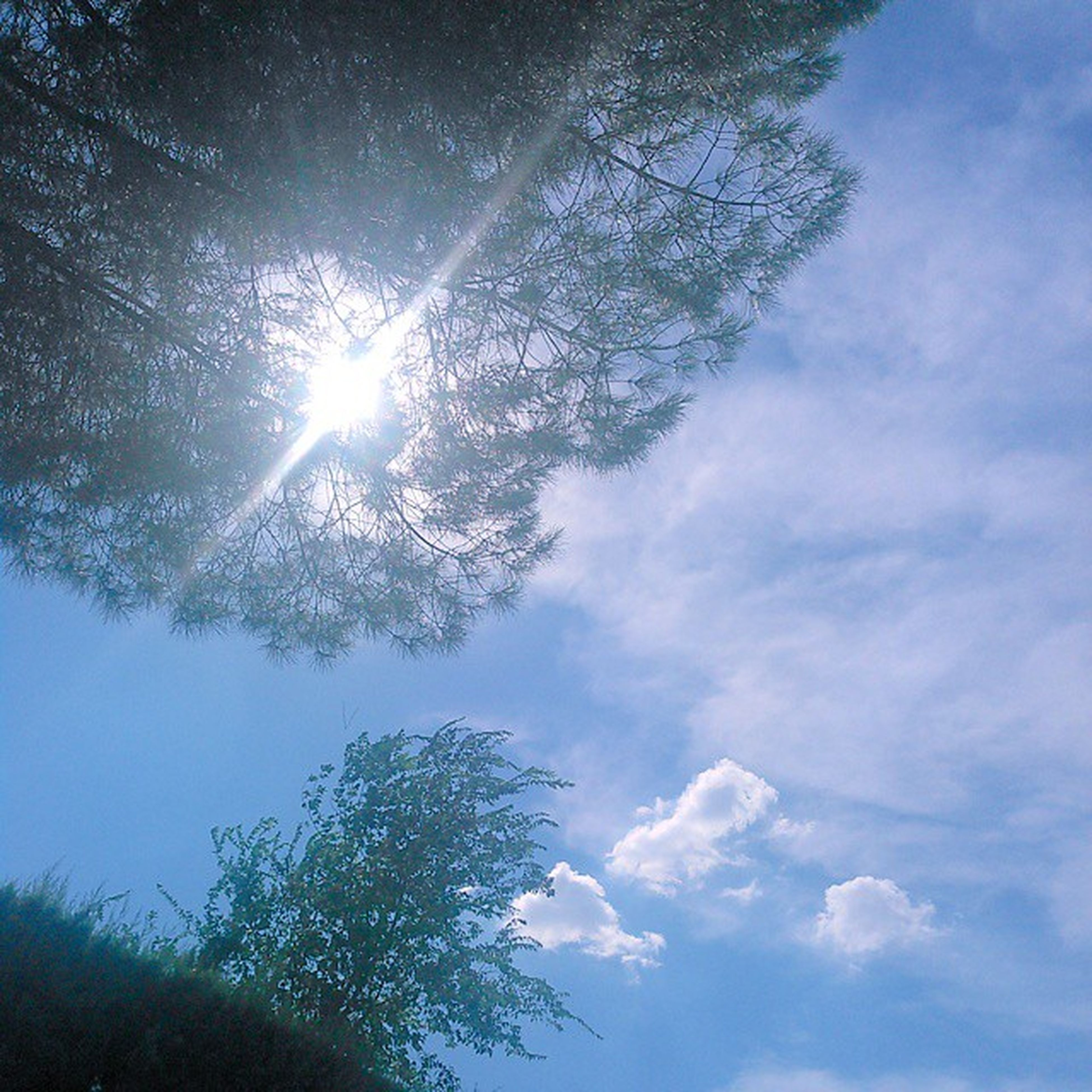 low angle view, tree, sky, sun, tranquility, beauty in nature, sunbeam, nature, sunlight, tranquil scene, scenics, cloud - sky, blue, lens flare, growth, branch, day, silhouette, outdoors, idyllic