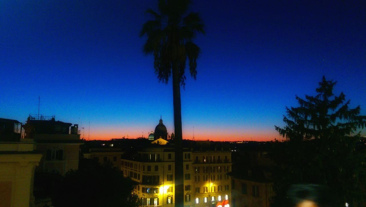building exterior, architecture, built structure, tree, palm tree, blue, no people, outdoors, night, illuminated, clear sky, city, sky, nature, cityscape