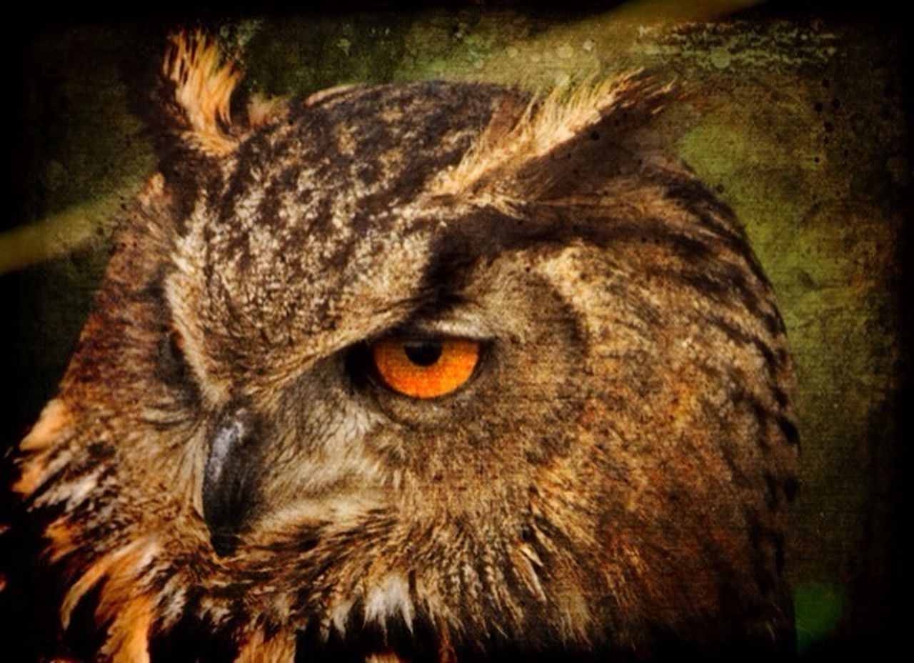 one animal, animal themes, animal head, no people, close-up, animal wildlife, night, domestic cat, portrait, domestic animals, mammal, outdoors, bird of prey