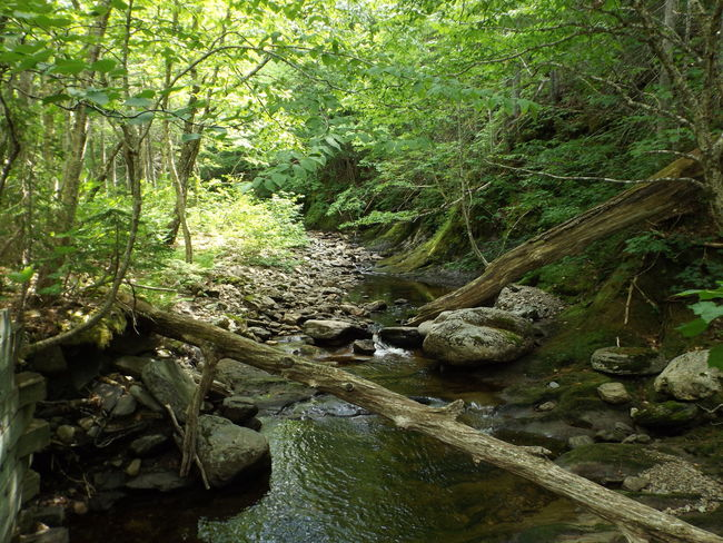 Forest Tree Tranquil Scene Water Tranquility Stream Scenics Nature Non-urban Scene Beauty In Nature Plant Solitude Growth Green Color Day Tree Trunk River Branch Narrow Outdoors Capebreron
