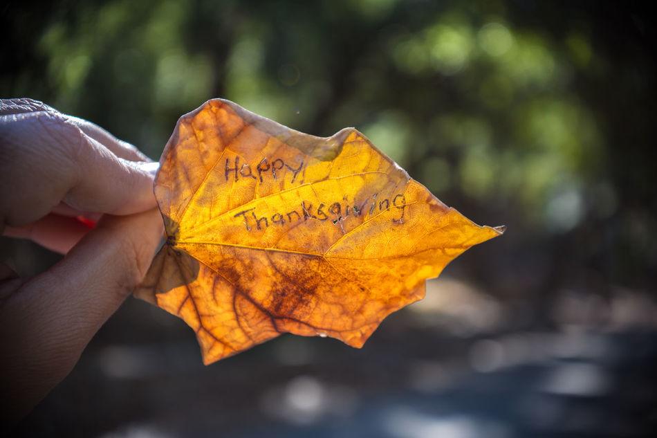 Beautiful stock photos of happy thanksgiving,  Autumn,  Celebration,  Change,  Close-Up