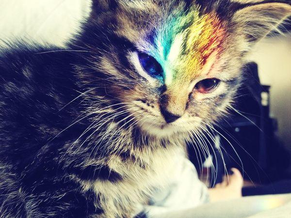 Le soleil contre la vitre fais que ce petit kiki à le drapeau de la gaypride sur la tête aha. Non en vrai je suis trop fan de ma photo. **♡ Cat Cute Gaypride