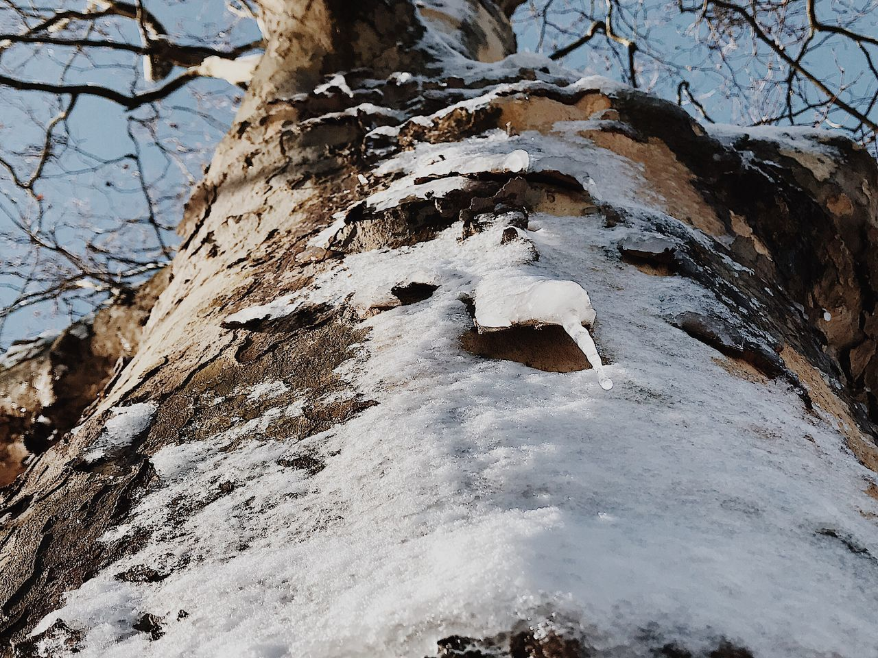 Snow Nature Cold Temperature Winter Tranquility Beauty In Nature Outdoors No People Day Sky Animal Themes Close-up Ice Frozen Winter Beauty In Nature Tree Trunk Tree Nature Water Branch Tranquility