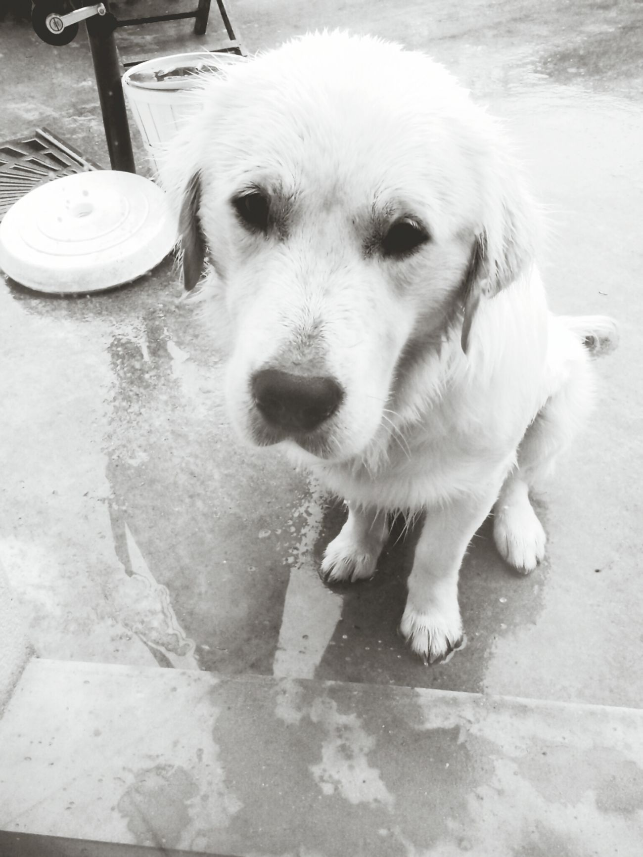 Denver, my love. Dog Bretagne